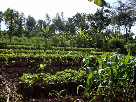 subsistence agriculture In subsistence agriculture, crops failing or livestock dying place the farmer at  in  commercial agriculture, fixed costs of crops sown and interest on debt means.